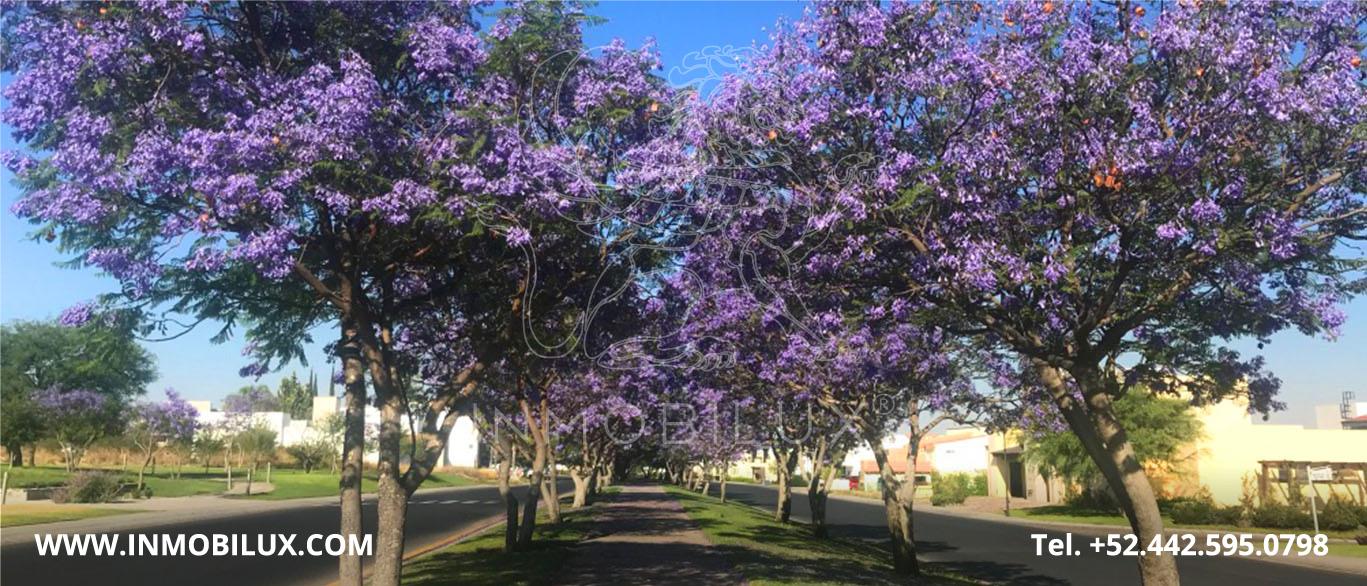Foliage El Campanario Queretaro Land Lot